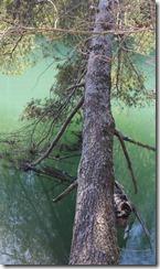 WildWood Park Bridgewater, VA 163