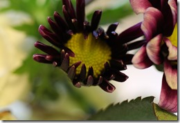 EXPERIMENTS IN PHOTOGRAPHY–MACRO (1/6)