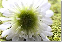 FLOWERS 5-14-2014 012