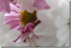 FLOWERS 5-14-2014 015