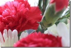 FLOWERS 5-14-2014 020