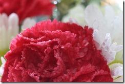 FLOWERS 5-14-2014 029