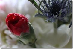 FLOWERS 5-14-2014 032