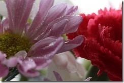 FLOWERS 5-14-2014 040