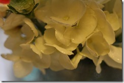 FLOWERS 5-14-2014 045
