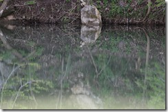 Wild Wood Park May 2014 014