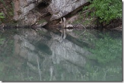 Wild Wood Park May 2014 016