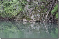Wild Wood Park May 2014 025