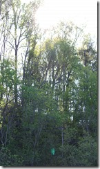 Wild Wood Park May 2014 026