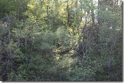Wild Wood Park May 2014 027