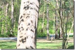 Wild Wood Park May 2014 030