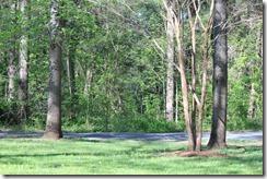 Wild Wood Park May 2014 031