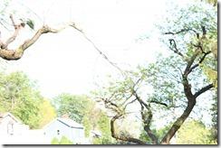 Wild Wood Park May 2014 038