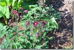 Wild Wood Park May 2014 040