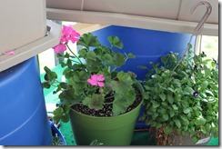 CONTAINER GARDENS 6-1-2014 001