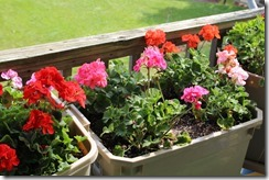 CONTAINER GARDENS 6-1-2014 006