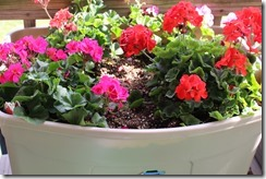 CONTAINER GARDENS 6-1-2014 007