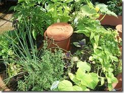 Ollas Herb Garden