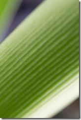 Green Foliage_-5