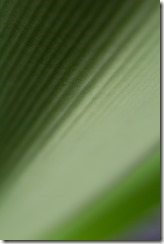 Green Foliage_-6