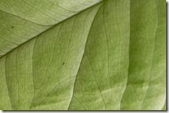 Green Foliage_