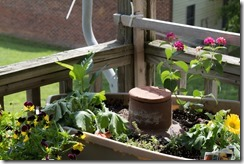 Container Gardening (10 of 11)