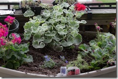Container Gardening (7 of 11)