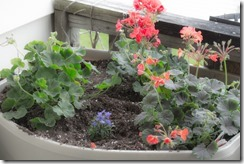 Container Gardening (9 of 11)