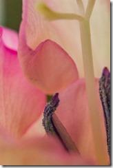 Gladiolus-Sensuality (16 of 29)