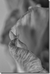 Gladiolus-Sensuality (21 of 29)