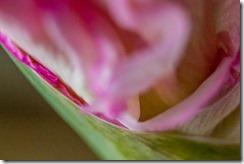 Gladiolus-Sensuality (25 of 29)