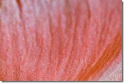 Gladiolus-Sensuality (9 of 29)