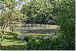 Wildwood Park - Geese 2016 (1 of 16)