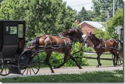 Horse & Buggies Going Home~ Dayton, VA (12 of 23)